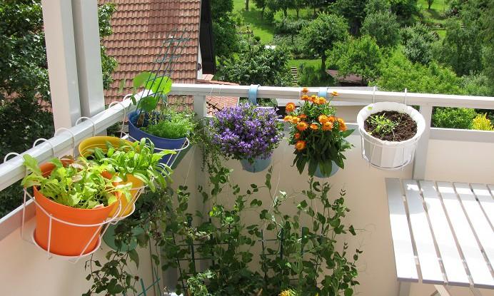 Ein paar Pflanzen auf einem Balkon