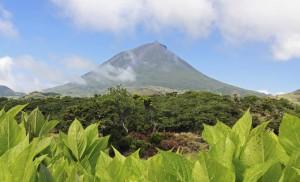 Island: Raue Schale, weicher Kern