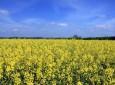Pflanzenschutz: Der Streit um Glyphosat